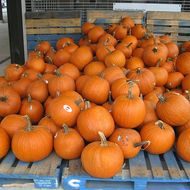 Coked-Out Pumpkins Found in