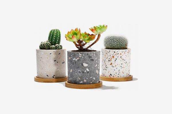 Trio of Mini Terrazzo Succulent Pots with Bamboo Trays, 2.4-Inch Diameter