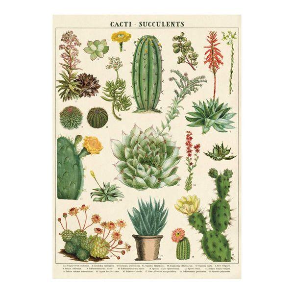 Cavallini Decorative Wrap Poster, Cacti & Succulents