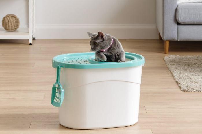 Iris Top-Entry Cat Litter Box & Scoop