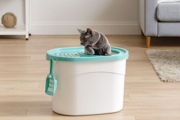 Iris Top-Entry Cat Litter Box & Scoop