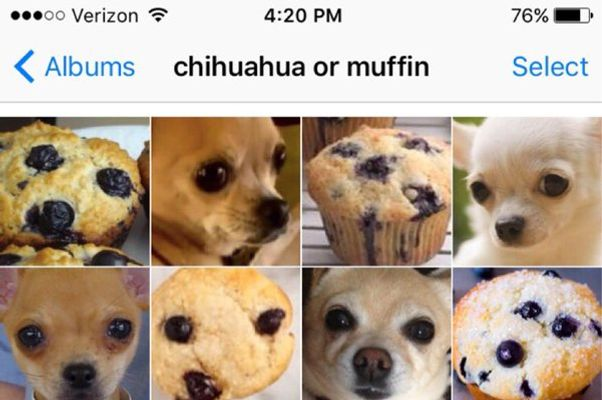 stoned chihuahua chihuahua or muffin is the sat for stoned animal lovers 5838