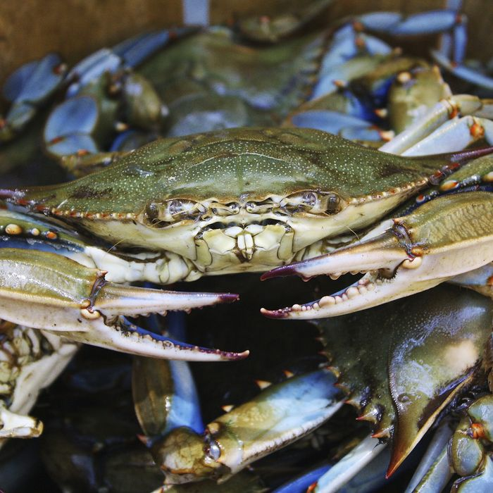 Blue E. Crab says: Accept no substitutes.
