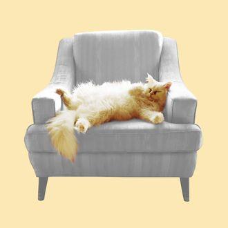 Cat lying in armchair