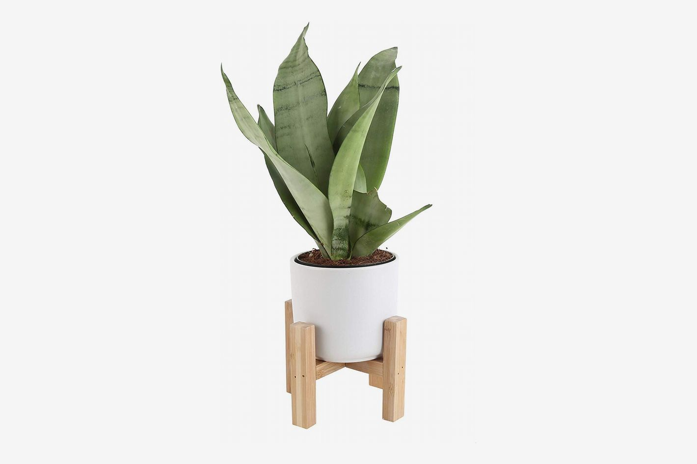 Costa Farms Snake Plant, with Mid-Century Modern Planter and Plant Stand