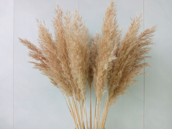 Dried Pastel Yellow Pampas Grass