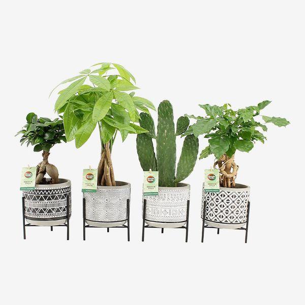 Indoor Plants with Pot Set