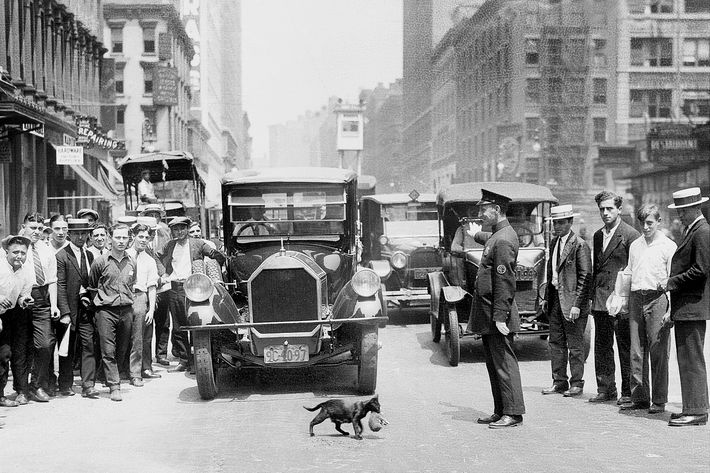 Mother cat Blackie halts traffic as she transports her five kittens, one by one, across Lafayette St. at Walker St. in lower Manhattan. Police Office James Cudmore gives a helping hand.