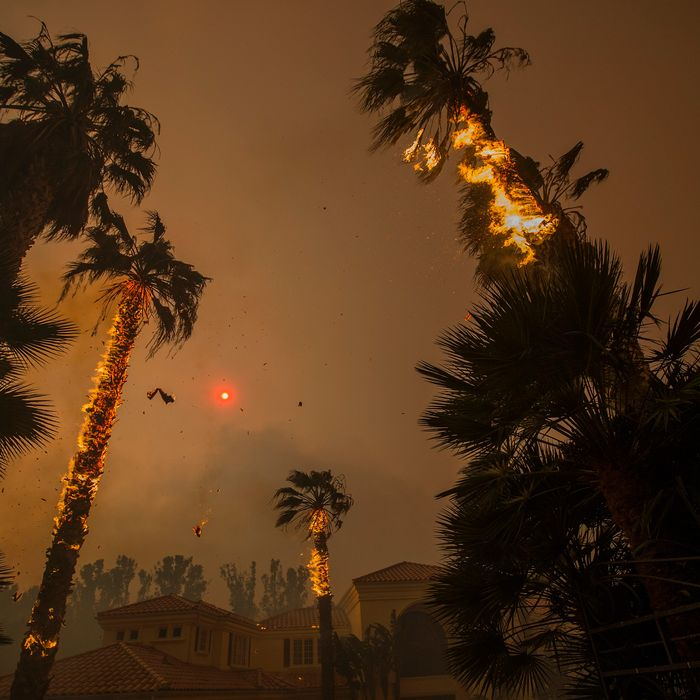 Embers falls from burning palms and the sun is obscured by smoke as flames close in on a house at the Woolsey Fire on November 9, 2018 in Malibu, California. About 75,000 homes have been evacuated in Los Angeles and Ventura counties due to two fires in the region.
