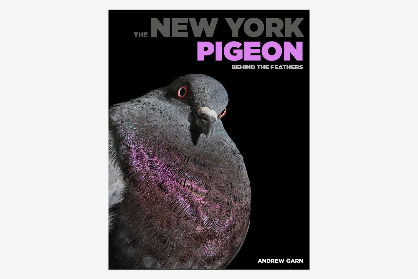 The New York Pigeon: Behind the Feathers by Andrew Garn