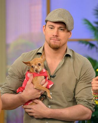 MIAMI, FL - JUNE 24: Channing Tatum appears On Univisions Despierta America to promote film