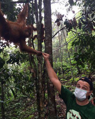 A real ape!