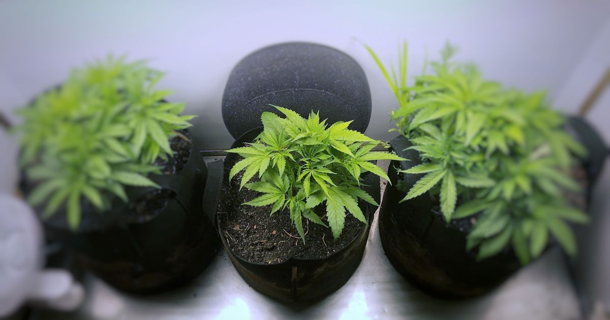 Buy cannabis Winnipeg
