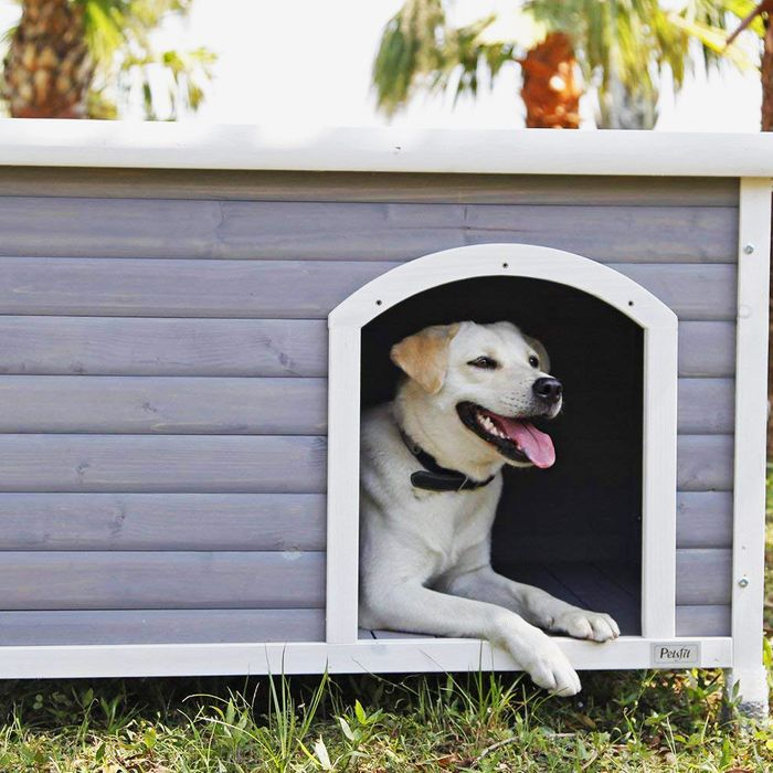10 Best Outdoor Dog Houses and Kennels 2018 Outdoor Kitchen Ideas For Old Houses Html on kitchen colors for old houses, kitchen designs for older homes, decorating for old houses, flooring for old houses, look inside old houses, porch ideas for old houses, modern kitchens for old houses, kitchen layouts for old houses, paint ideas for old houses, closet ideas for old houses, windows for old houses, storage ideas for old houses, tiles for old houses, kitchen plans for old houses, landscaping for old houses, curtains for old houses,