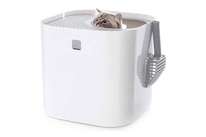 Editors' Picks: Stuff Your Cat Will Love, Featuring Toys, Litter