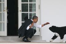 WASHINGTON - MARCH 15:  U.S. President Barack Obama greets his dog Bo outside the Oval Office of the White House March 15, 2012 in Washington, DC. Obama spoke today at Prince Georges Community College about energy.  (Photo by Martin H. Simon-Pool/Getty Images)