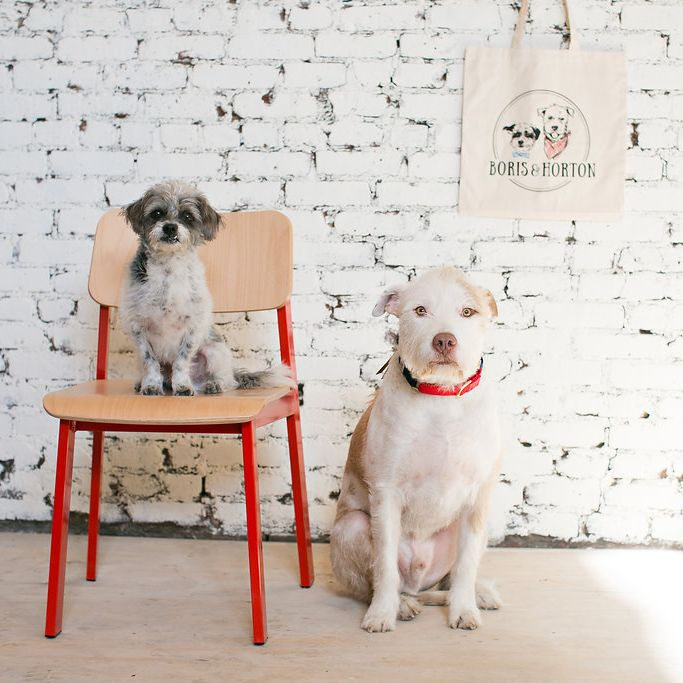 New Yorks First Dog Cafe Is Set To Open This Month