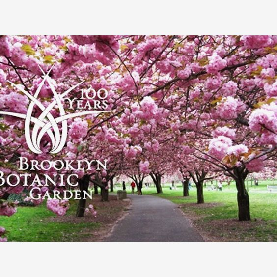 Brooklyn Botanic Garden Individual Membership