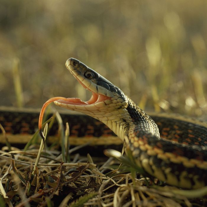 This snake is ready to get its groove on.