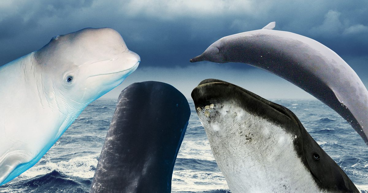 Whales, Ranked
