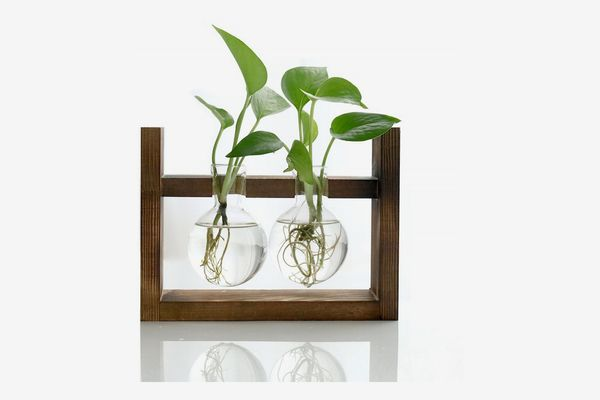 Ivolador Desktop Glass Bulb Vase with Solid Wooden Stand
