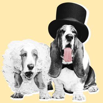 Bride and Groom Basset Hounds.