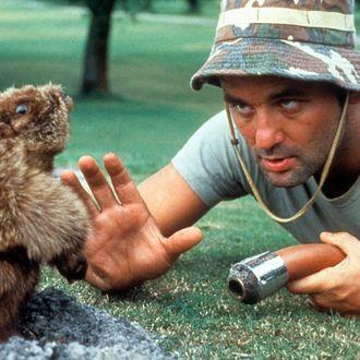 Bill Murray In 'Caddyshack