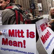 A pug named Sake sits in his owner's backpack during a small protest by a group called Dogs Against Romney