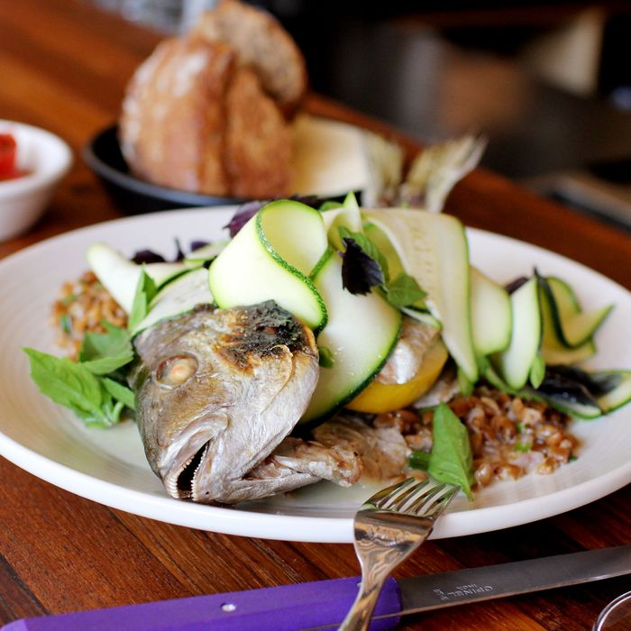 Roasted whole porgy, warm farro, shaved zucchini, and fermented radishes.