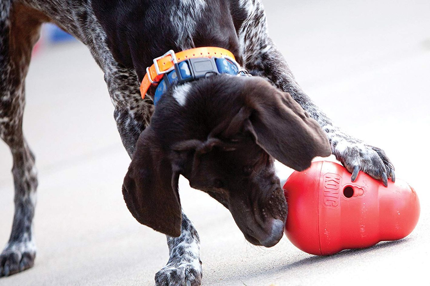 KONG Wobbler Interactive Treat-Dispensing Dog Toy