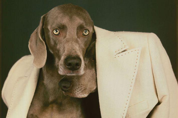 <em>Undercoat</em>; Polaroid, 2001.