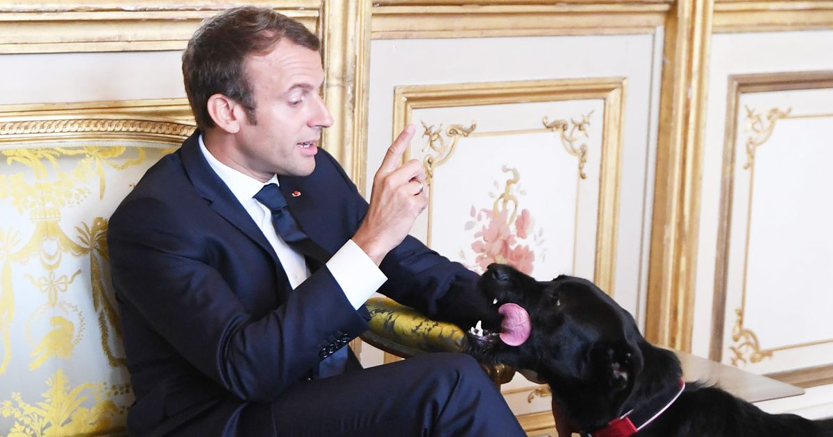 How to Interrupt a Meeting Like a French President's Dog