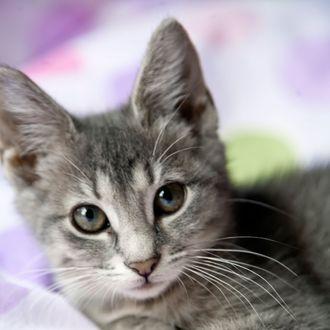 Kitten resting on a blanket