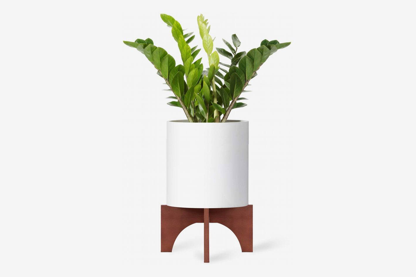 Best Plants, Misters, Watering Cans, and Plant Stands 2019