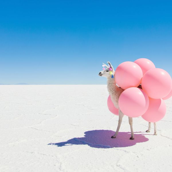"Llama with Pink Balloons, 11.5"" x 17"""