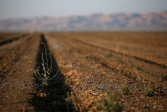 A California field, not growing almonds.
