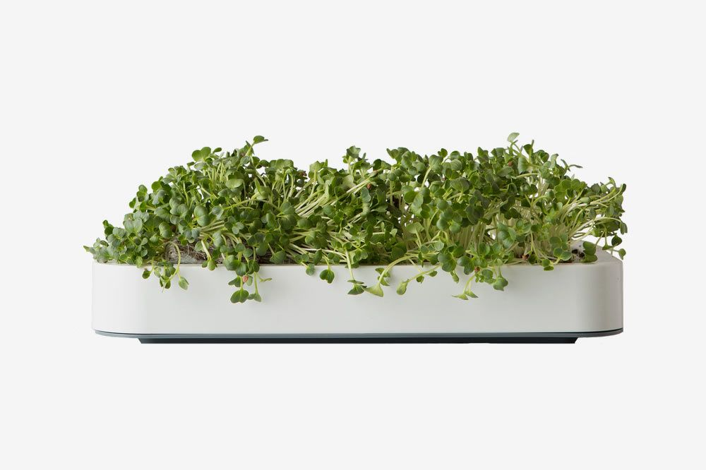 Chef'n Microgreens Garden