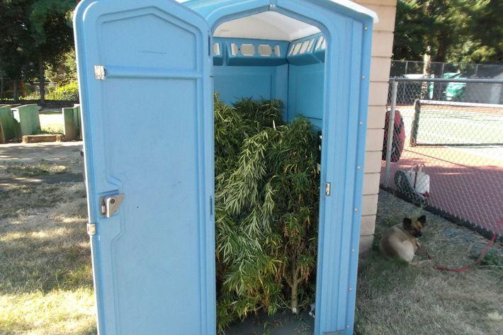 Weed toilet