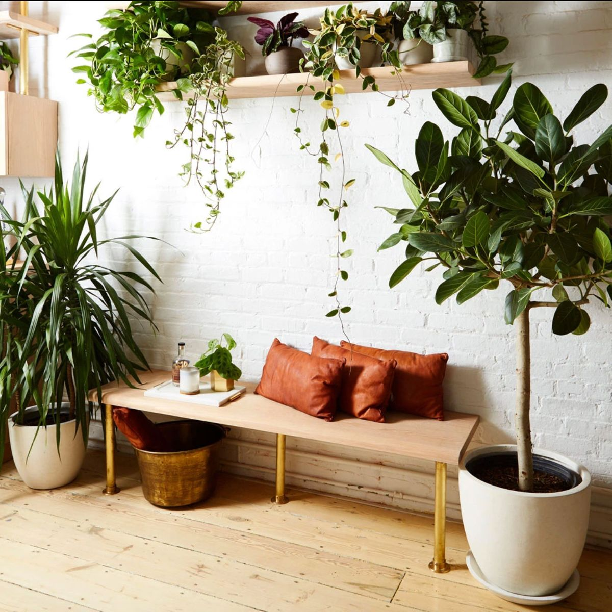 Best Houseplants For Winter And How To Care For Them 2020 The Strategist New York Magazine
