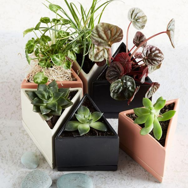 The Sill Jules Planter