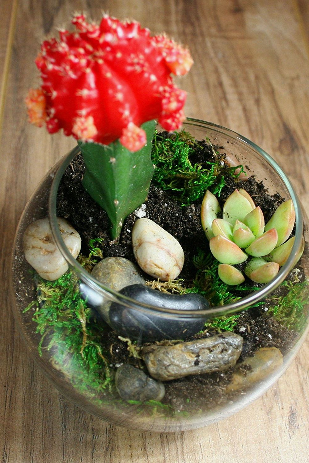 Complete Terrarium Kit: Succulent Planter With Soil and Glass Globe