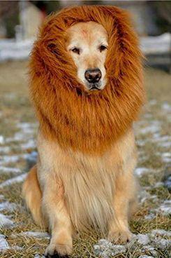 Etpark Lion Mane