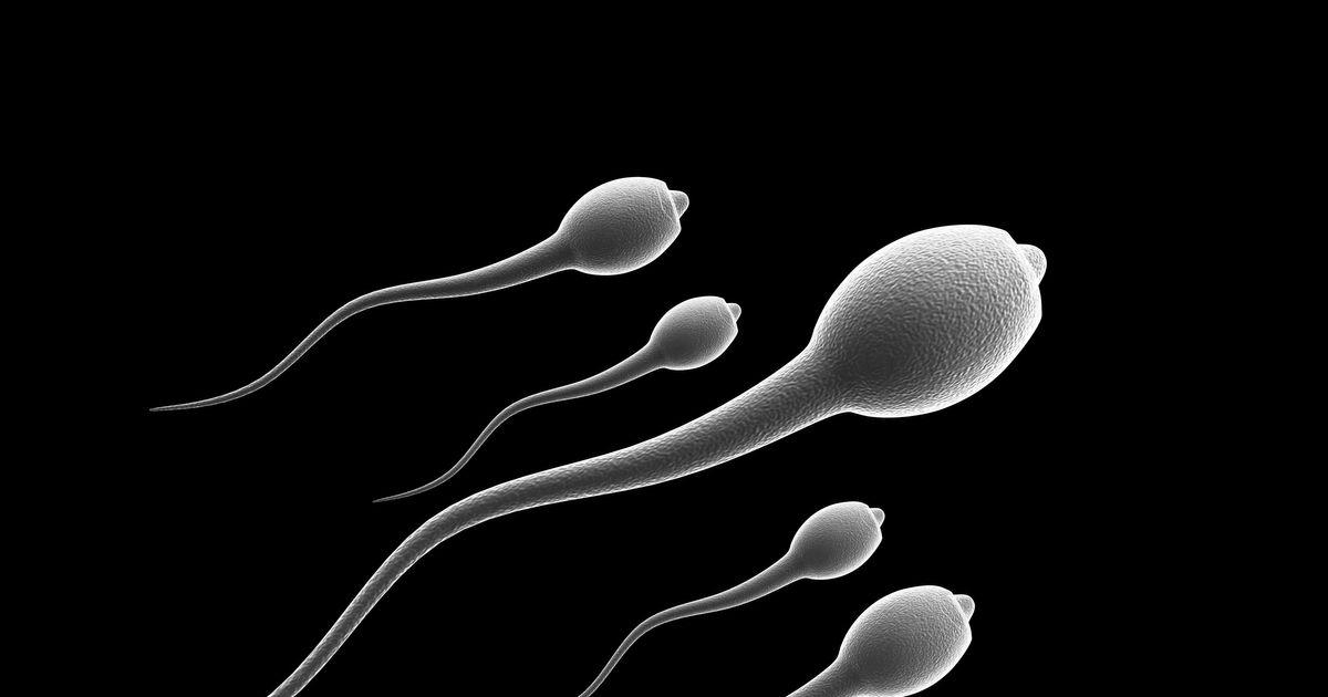 chto-razzhizhaet-spermu