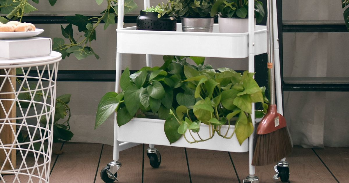 22 Things to Put Plants On (Including Some Plant Stands)