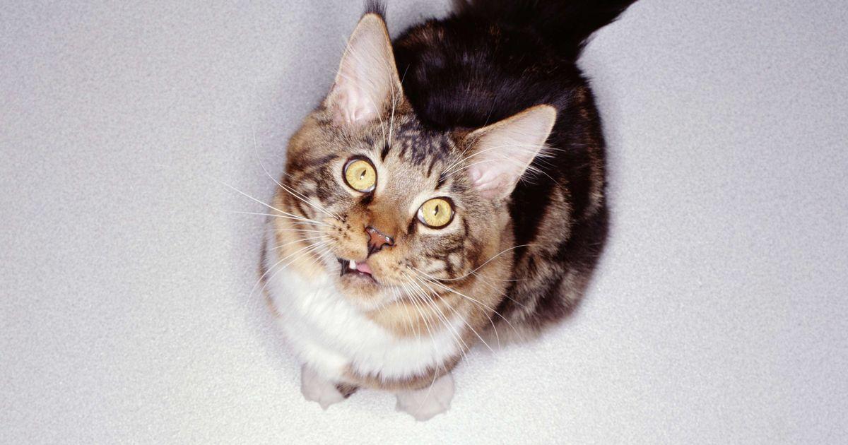 cat ear speaker headphones