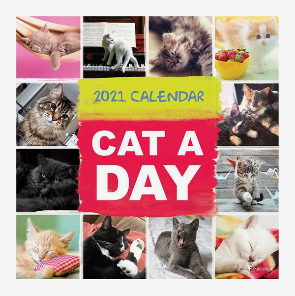 TF Publishing 2021 Cat a Day 12-by-12-Inches Wall Calendar