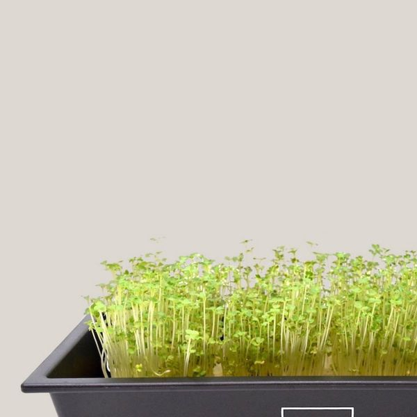 Hamama Powerhouse Veggie Grow Kit