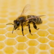 U.N. Warns the Declining Bee Population Is Going to Devastate Our Food Supply