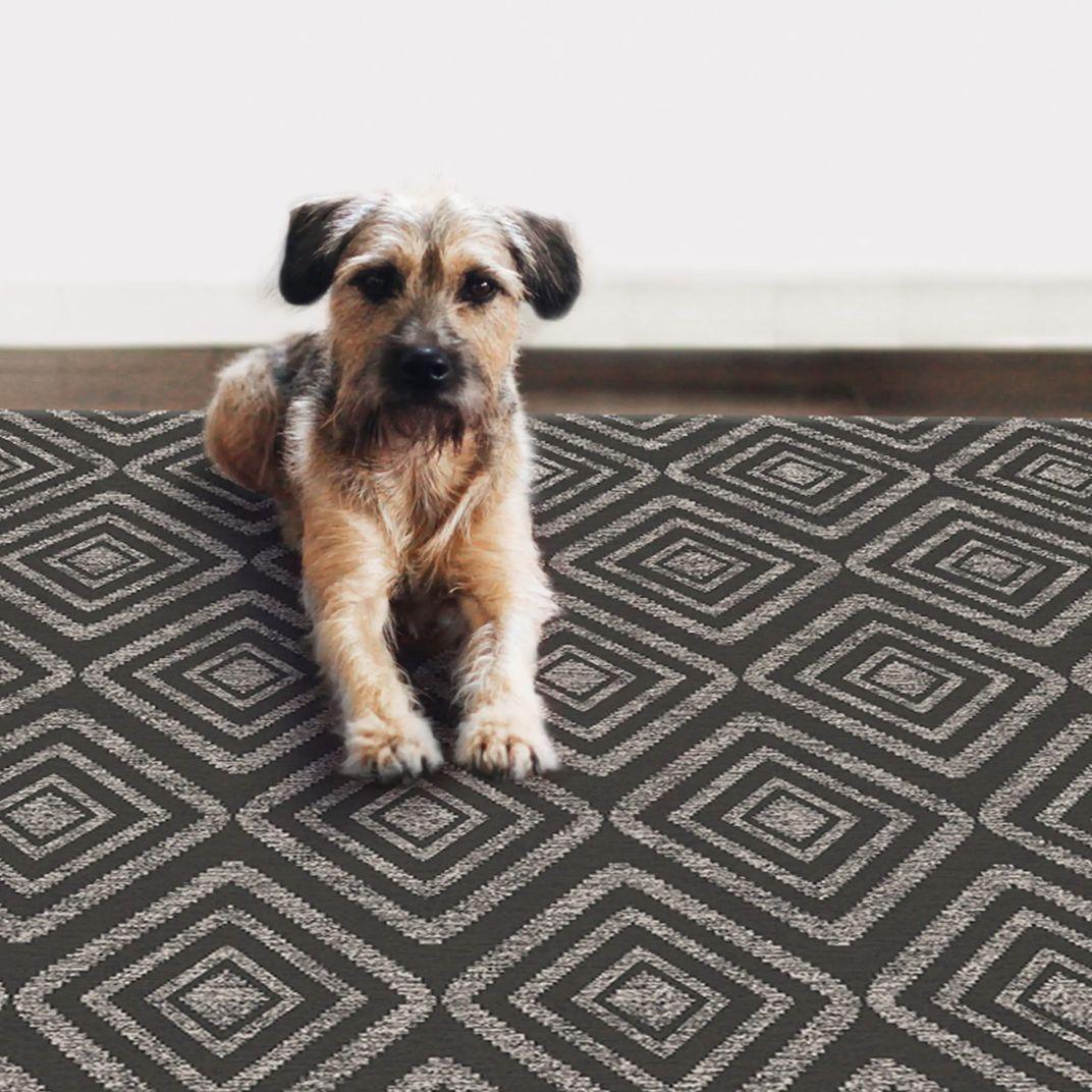 Dog Proof Throw Rugs: Bathroom Accessoreis