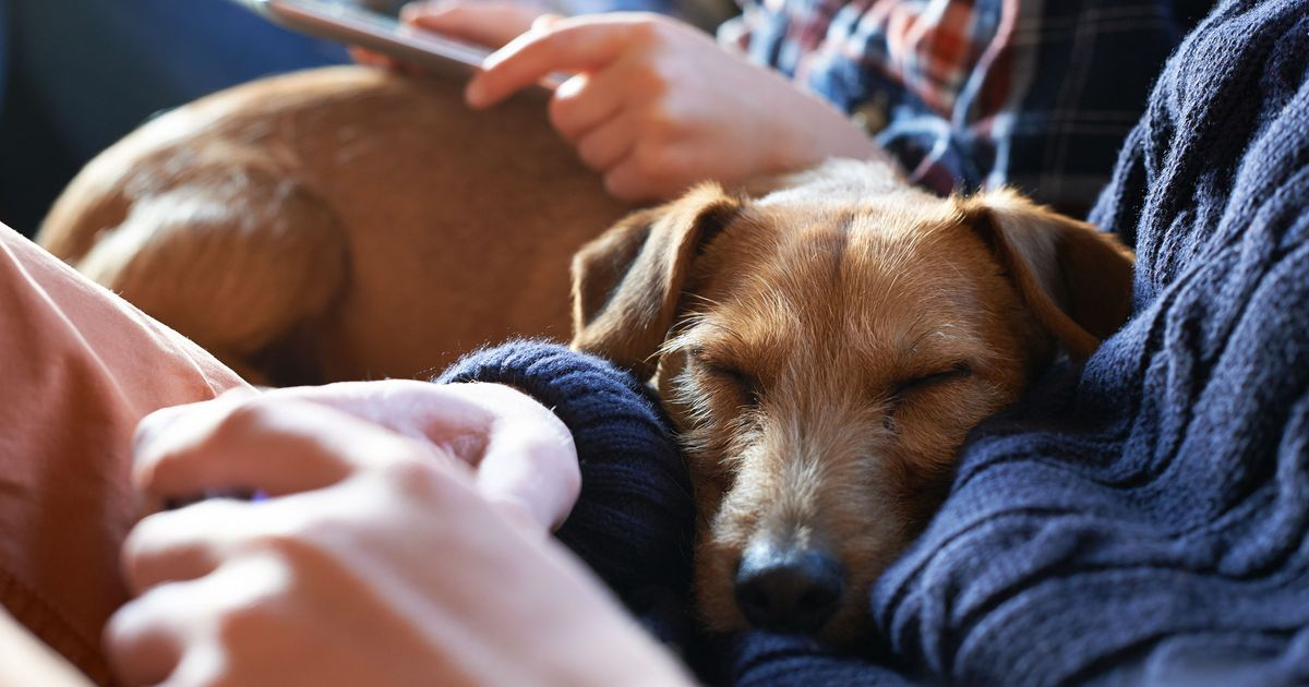 The Invisible Emotional Burden of Caring for a Sick Pet
